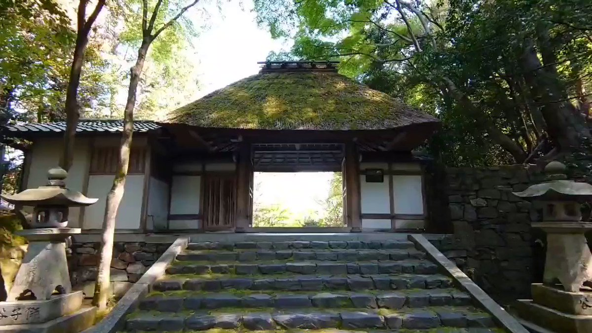 Honen-in Temple, one of my favorite and visiting spots for the bike tour. Located  in the mountain and deep in the wood. The temple's atmosphere works its  magic on you. Not onyl is it my favorite, but also it would be your favorite too.  #法然院 #京都  #temple #Kyotopic.twitter.com/ysYaPYyqbn