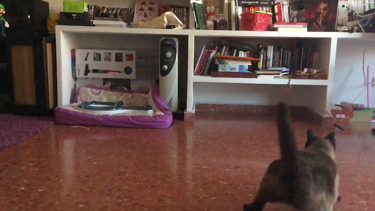 Doble salto mortal!!  #AdoptaNoCompres #gatos pic.twitter.com/ddAkdfM2zq