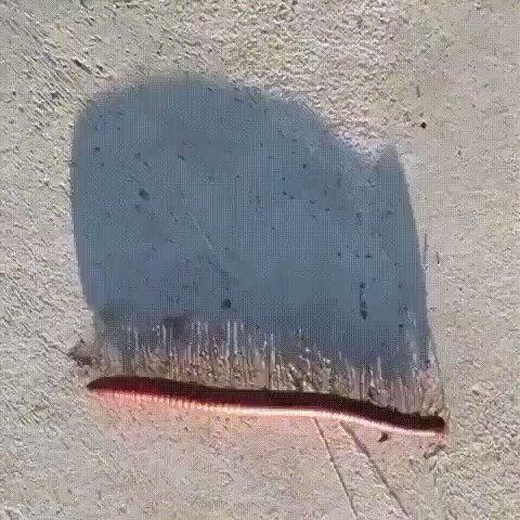 A centepide shadow.