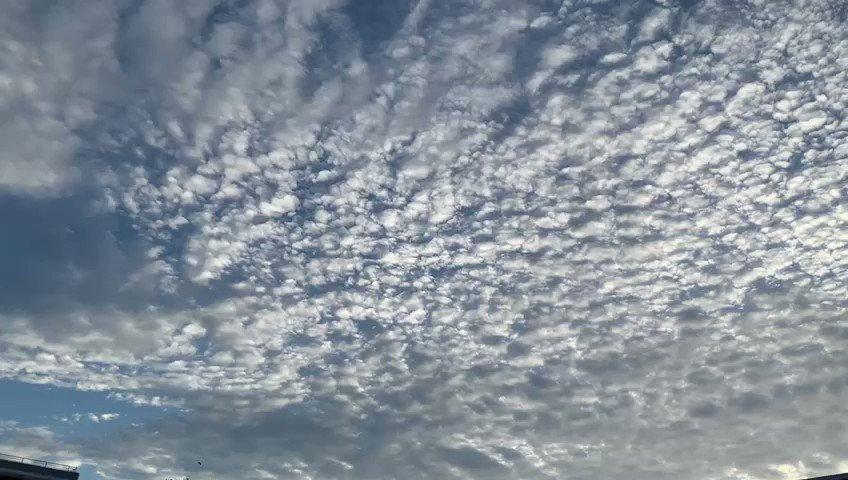 Las nubes #altocumulus adornan nuestro cielo en esta mañana. Gracias 😊 Ramonita y a todos mis Amigos del Tiempo por compartir sus fotos y vídeos. ¡Sigan que me encanta! ☀️☕️