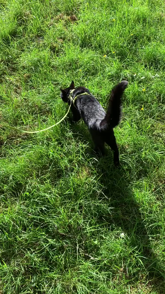 """Rolf's lockdown diary 23 May: My American human (who knows about economics) says we're in """"fat tail"""" times where extreme, unpredictable events happen. I also live in a """"fat tail"""" world. Mine occurs when I see things that excite me (like squirrels) or scare me (like dogs). Rolf x"""