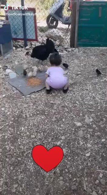 حتى و هي (دجاجة ) ما ترضى الأم على عيالها ..!😂 #٣٠_رمضان #نجران