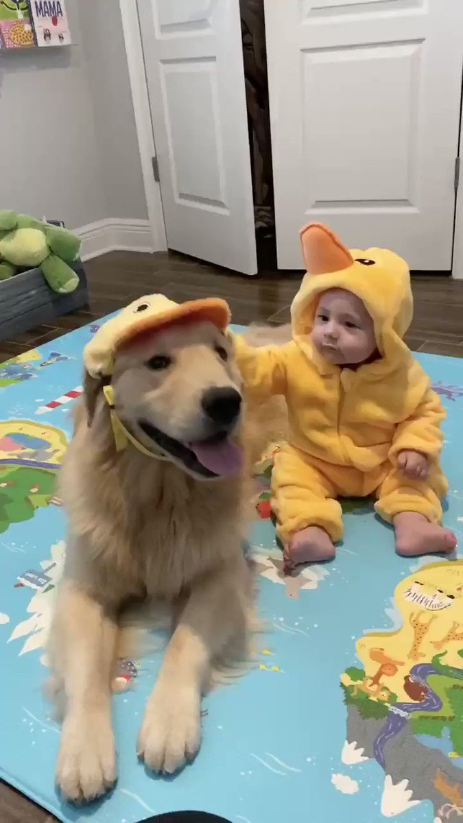 I think he imprinted on Kevin  Ducks fly together #GoldenRetrievers #baby #duckspic.twitter.com/7W0bXNO9hL