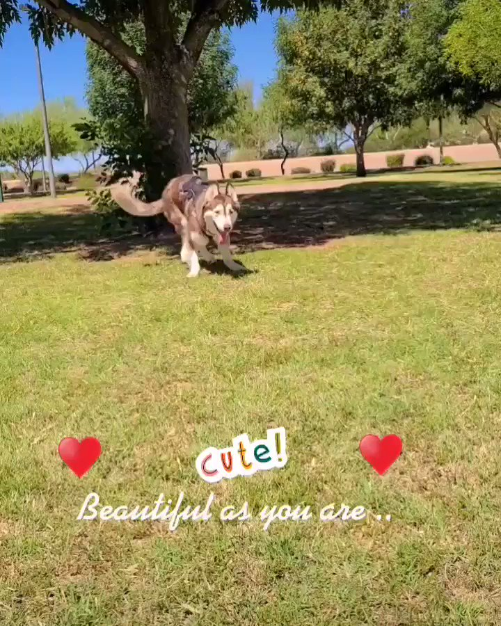Here comes a zooming clyde!! Happy Saturday!! #dogs  #SaturdayMood #motivational #motivation #goals #dogsoftwitterpic.twitter.com/aEPwKEjydJ