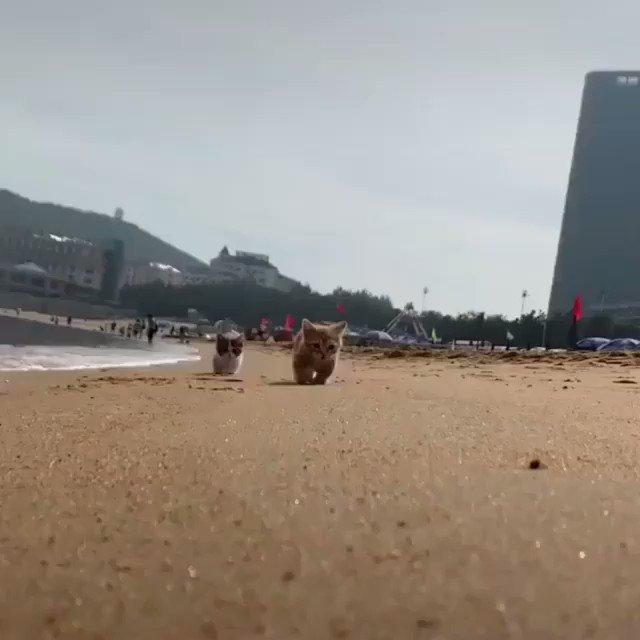 砂浜を散歩する子猫