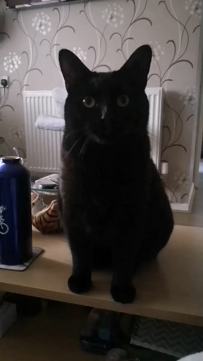 Happy 7 year Wedding Anniversary to my mums! Then it's mum1 31st birthday tomorrow. She has no family, but she does have her wife and Twitter to celebrate with.  Here's a dance for the celebration  #celebrate #cat #coronavirus  #Twitter #cats #BlackCat #love #happy pic.twitter.com/gVRKyJc2er