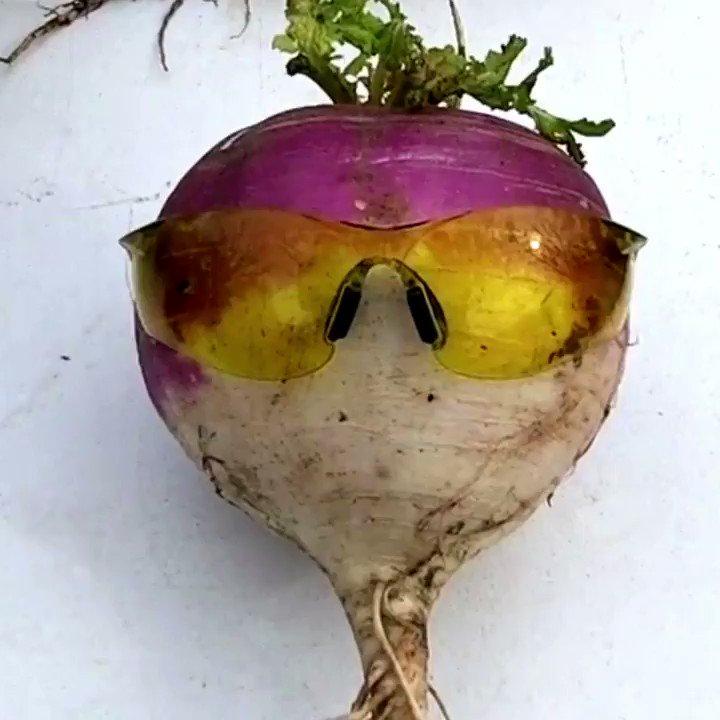 Turnips are the new friendly neighbor → http://youtu.be/UZAn2URAXOMpic.twitter.com/u2jgcc5TCV