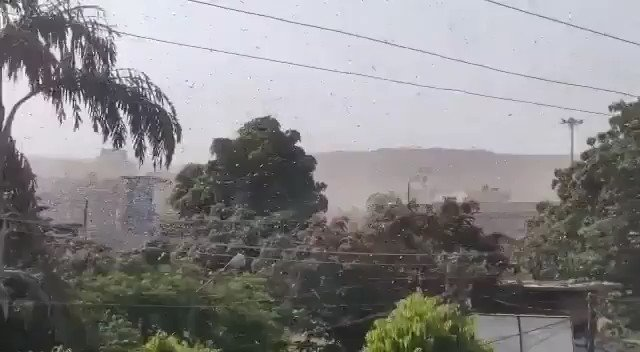 Locust Swarms in Jaipur today They will be hitting across Rajasthan, Madhya Pradesh and flying east. Very bad for farmers as they destroy the crops.