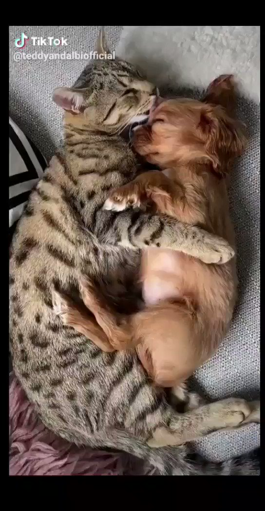 This kind of love melts my heart, warms my soul, awakes the the most tender feelings & gives me hope that people will come to their senses when it comes to love. HAPPY BEGINNING OF THE WEEK. @teddyandalbiofficial #TikTok #foryou #fyp #puppy #cat #kitten #cute #cutechallenge #lovepic.twitter.com/PrtkBxU6Gm