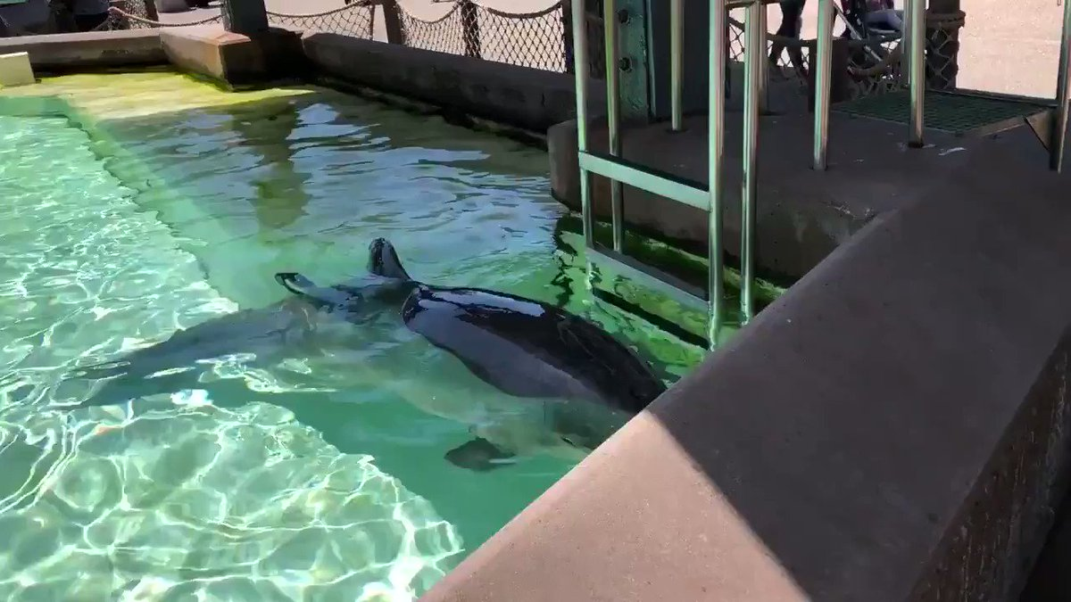 Dolphins in captivity suffer immensely.  Reports of dolphins floating lifelessly in places like SeaWorld are common. This is a sign of psychological distress. #EmptyTheTanks