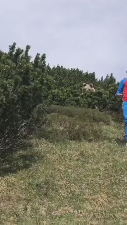 12-year old kid cautiously, calmly walking down the hill with a gigantic bear stalking him...
