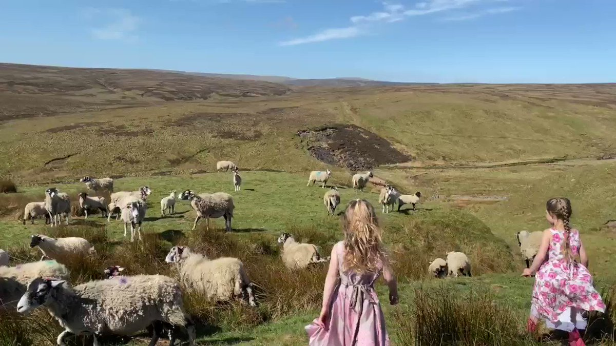 The sheep have not yet forgotten about being foddered. Works a treat, they follow the children & it keeps them all entertained whilst I head off around the boundary looking for the more adventurous members of the flock.  #patience #sunshine #shepherdess #yorkshire #outdoors pic.twitter.com/qo1VI163C6