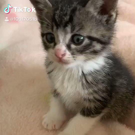 movie〜 #猫好きさんと繋がりたい #tiktok #猫 #ネコpic.twitter.com/XuQXaxwqxG