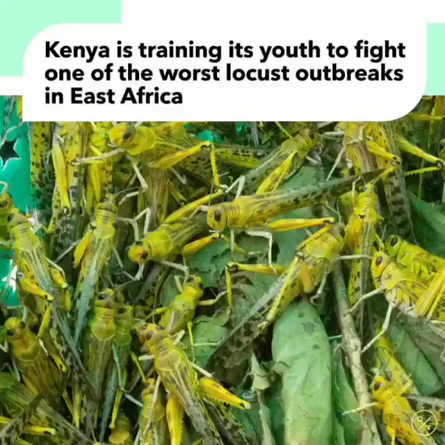 Kenya is trying its best to fight it out. They have formed youth brigades to use specialised pesticides. The results are yet to be confirmed.