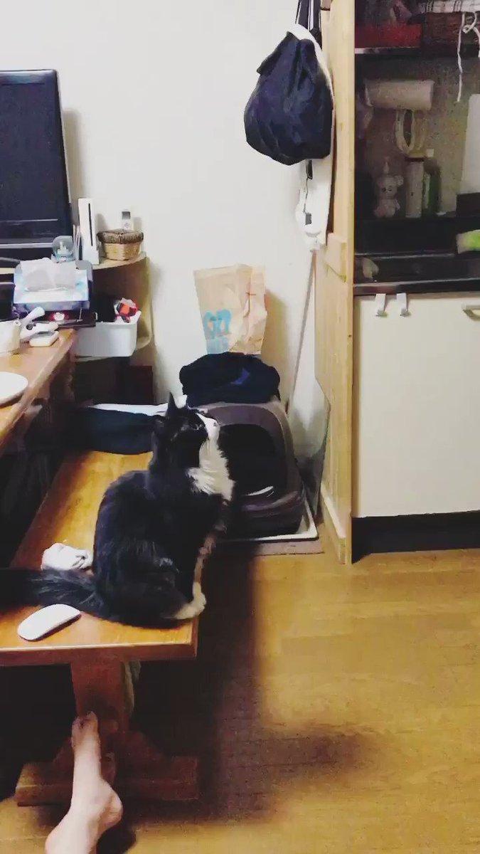 JUMP  #cat #ネコ #kitty #cutecat #猫 #neko #cats #ilovecat #にゃんこ  #ねこ #ねこと暮らす #猫好きさんと繋がりたいpic.twitter.com/1l9gaDJfUn