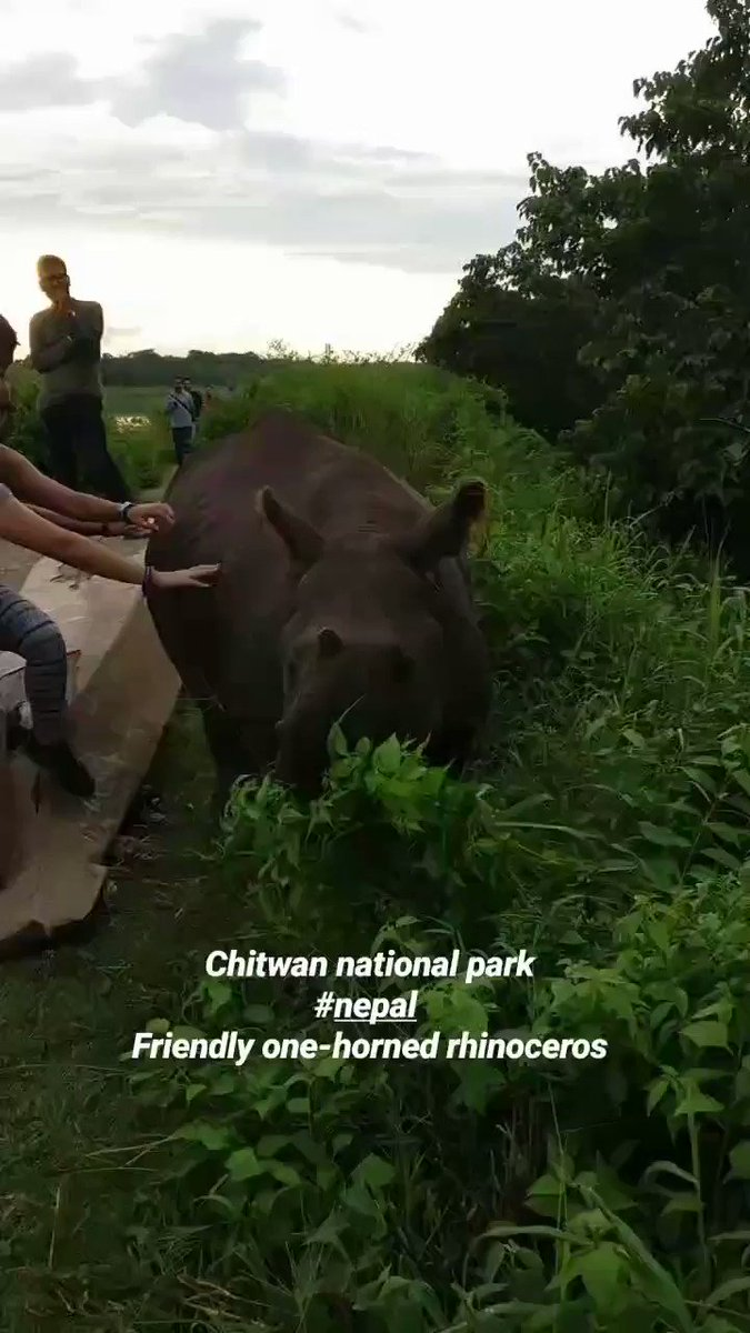 Chitwan National Park is very famous for Wildlife Safari, Bird Watching, and Tiger Tracking in Nepal #Nepal  #chitwannationalpark #tour #wildlifepic.twitter.com/EKav2FC6PO – at Pashupatinath Temple
