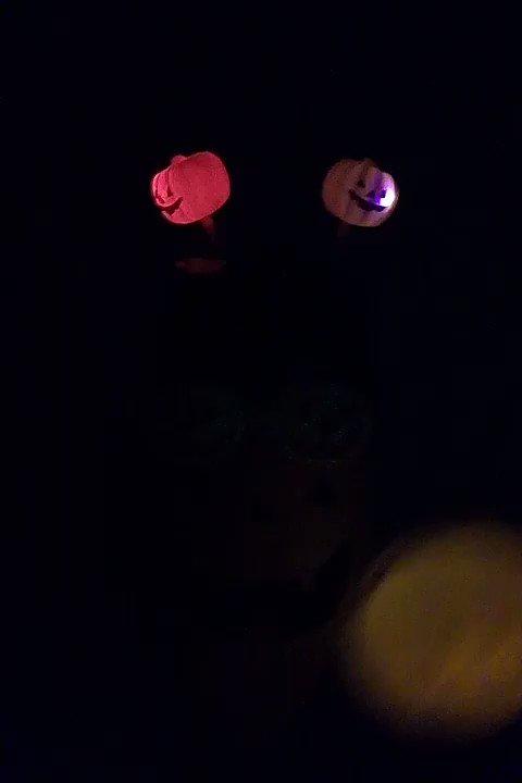 なおばさん もう止まらん笑 #ハロウィン  もうコロナ疲れ限界だーーー pic.twitter.com/BFLc1i8VOd