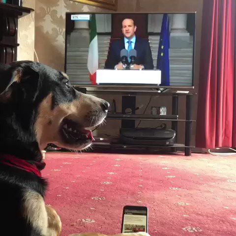 A dogged adorer !