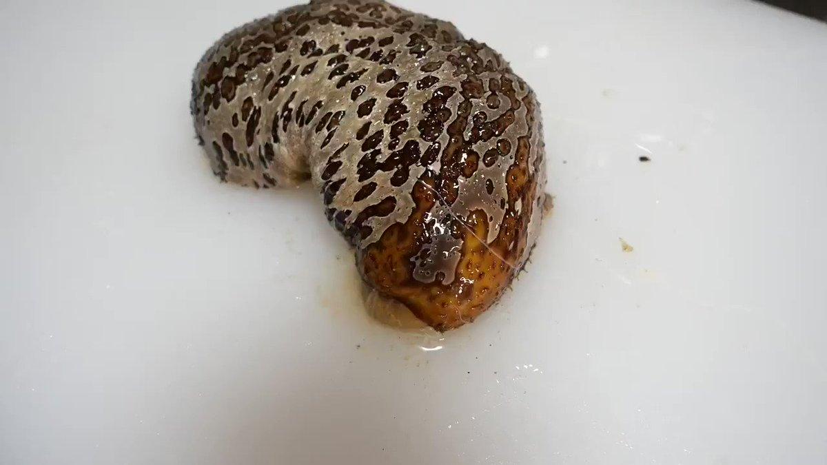 ナマコを捌いてたら中からエイリアンみたいな生物が…心臓が止まるかと思いました。。