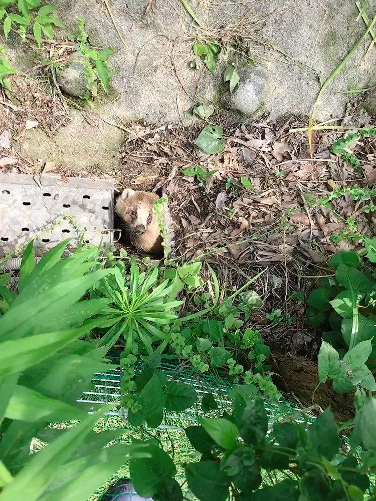 この辺ウロウロされるとアロちゃんたちや鴨たちが心配だし、マダニを落として行かれても困る😱除虫菊パウダー撒いておこうかな(;´д`)