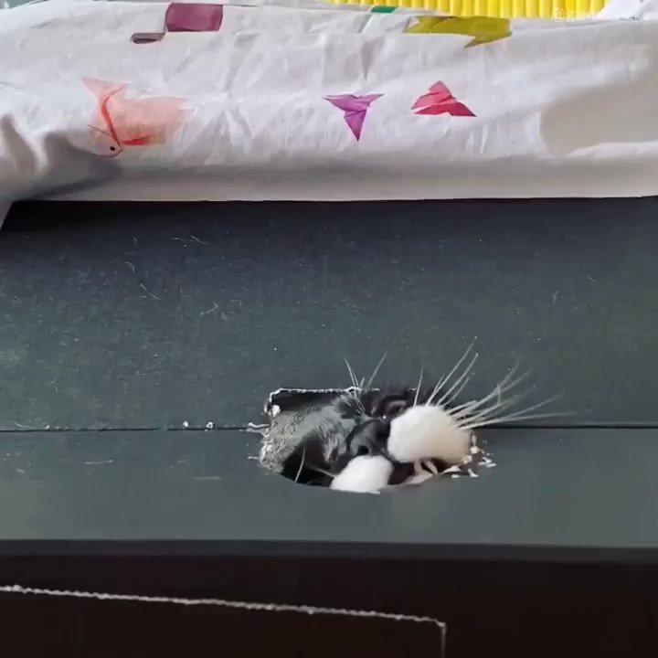 どうしても通り抜けたい猫