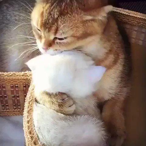 抱きしめて舐めまわしてる(๑ơ ₃ ơ)♥