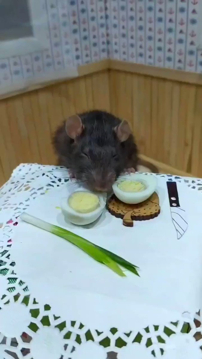 I'm tired of cooking so I'll eat #rat #funny #cute #cook pic.twitter.com/lbt453Z80l