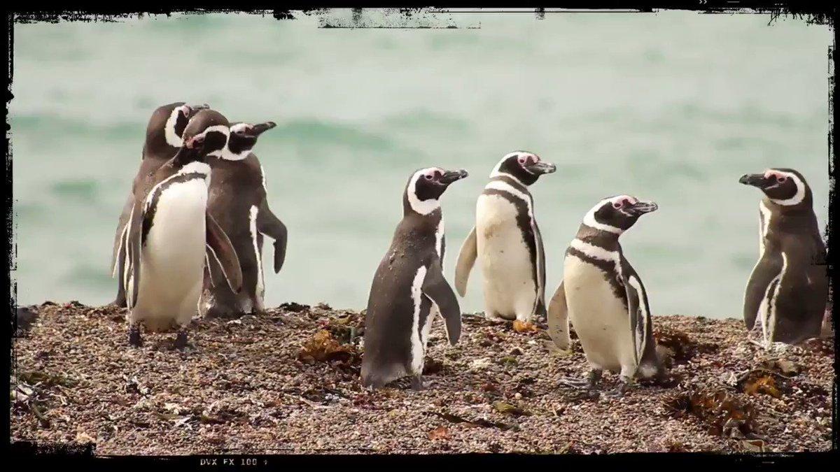 Empeza a soñar tu próximo viaje!   #naturaleza #nature #visitargentina #puertomadryn #chubut #Travel #vacaciones #viajaconrusticapatagonia #volveremosaviajar #travelphotography #quedatencasa #encasa #pinguinos #puntatombo @AlexTiendapic.twitter.com/tD8WIs7xNR – at Puerto Madryn