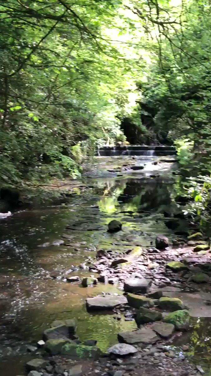 Good Morning #Scotland #nature #flowers #water #reflections #Peaceful #naturephotography #naturelovers #walking #birdsong #atmosphericpic.twitter.com/EHotiXkTuH