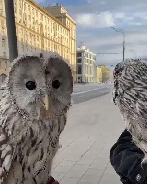 #cute  #owls #beauty #animals    So cute pic.twitter.com/4o3m3IT4LR