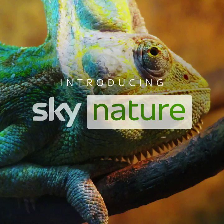 Introducing #SkyNature: A new channel available to all of our customers, dedicated to exploring the beauty & wonder of our planet. 🌎 We've also launched #SkyDocumentaries, where you can watch #ThePlasticNile on 1st June at 9 pm. https://t.co/fNa2jwVkqZ
