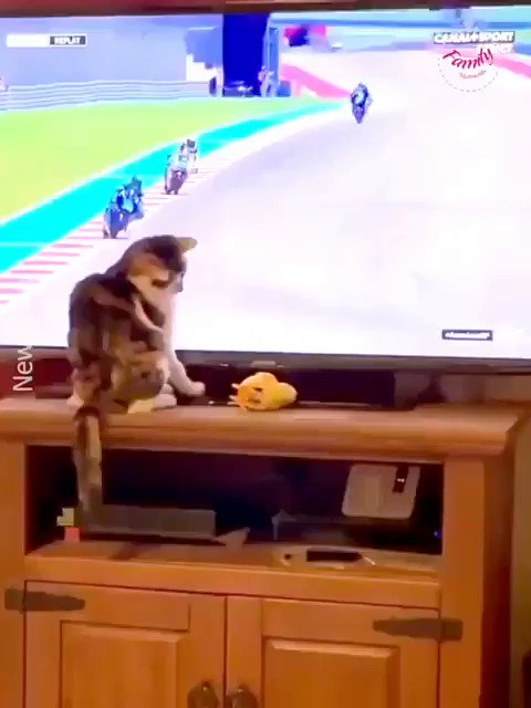 CatCh !  Just a cat chilling somewhere. #cat #fun pic.twitter.com/WIhs9iWfJv