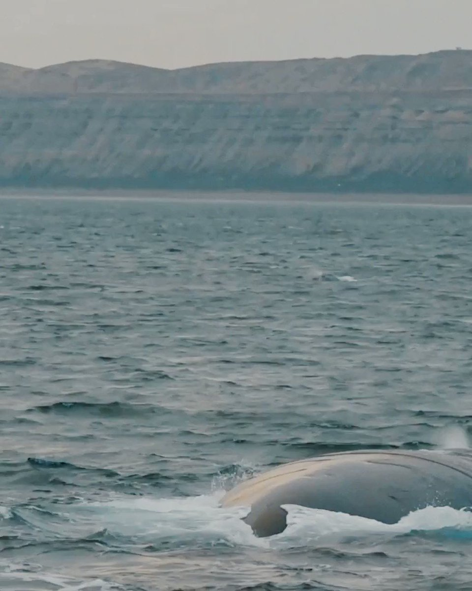 #TravelFromHome and enjoy the charm and beauty of the queens of the sea.  Have you ever went to see the whales when they arrive in Argentina?   Katie sent us her audio counting hers, will you send us yours?   #VisitArgentina pic.twitter.com/U5dUHi16Yh