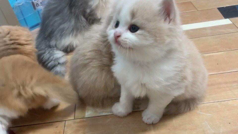 生後30日の子猫です🥰#猫