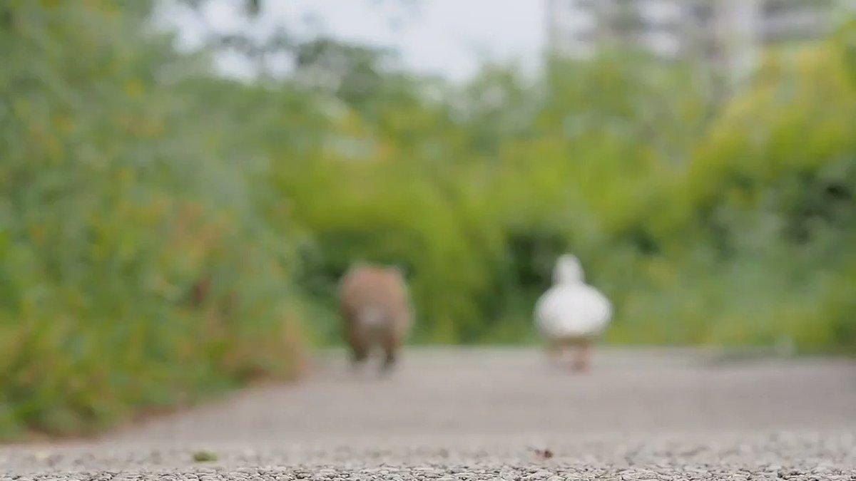 うさぎとアヒルの徒競走