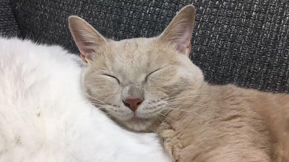 幸せそうな寝顔😴
