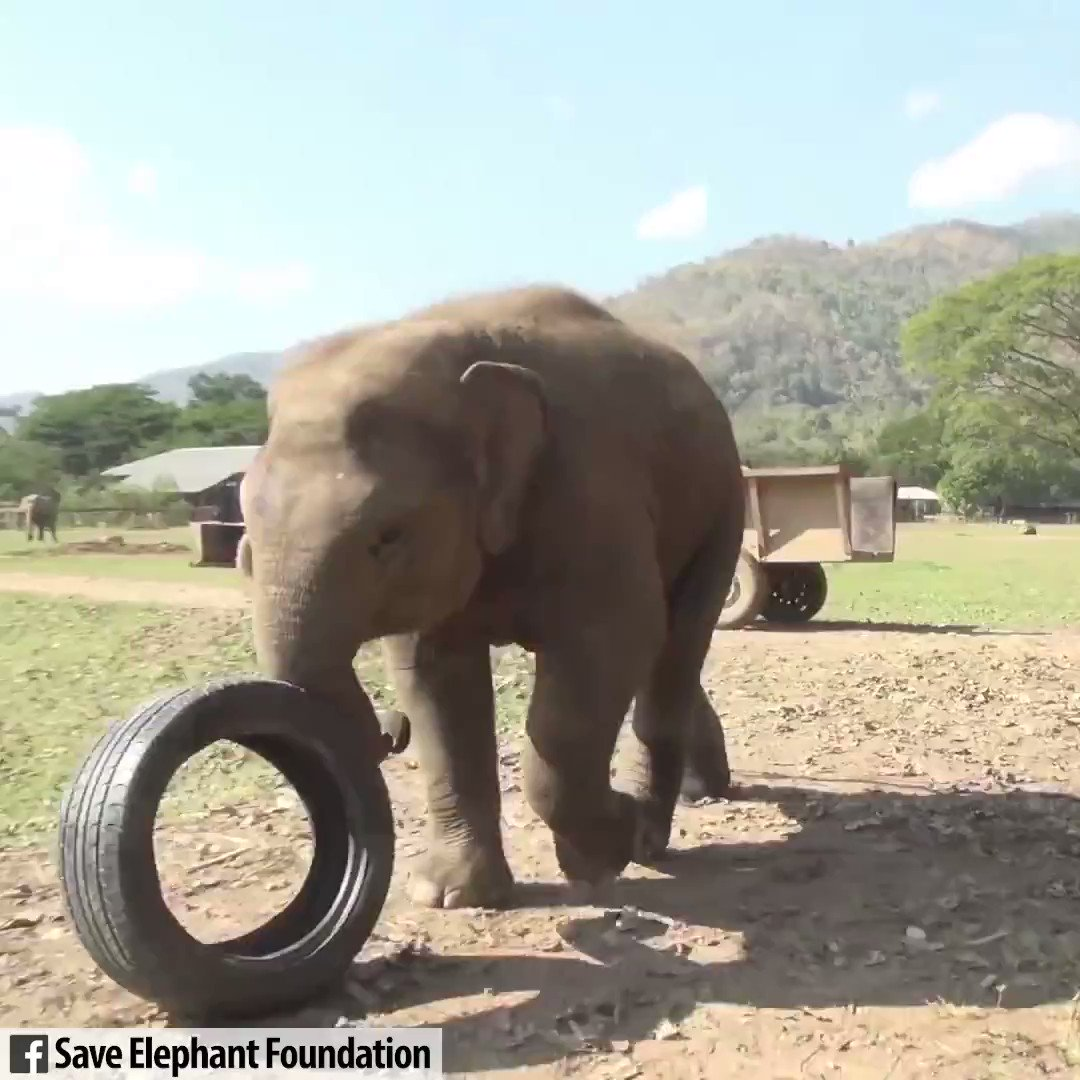 Moving video. I wish we could accept that all beings r walking a significant life path on this planet. Human life is far too short to have it tainted with the cruelty inflicted on #animals.  We cannot be #kind/'worthy' if we're cruel. From @_AnimalAdvocatepic.twitter.com/1GLzH4ne1t