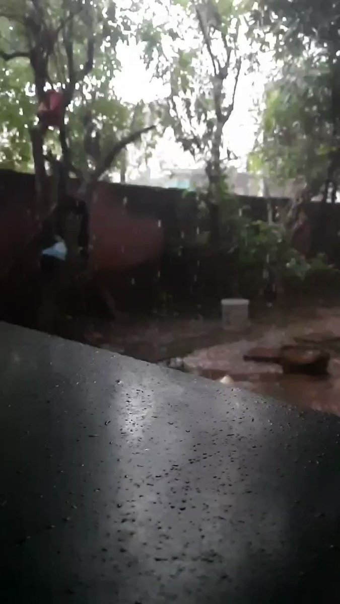 Rainy day in tamilnadu Whoever dont have plants in tree see my house with full of trees Plant more trees to get more rain. #savetrees #COVID19  #TamilNadu  #rainyday  #மழை  #coronavirus  #TamilNadulockdown  #TNCoronaUpdate Watch on YouTube  https://youtu.be/QppNXHmmnHUpic.twitter.com/adgegKcaPl