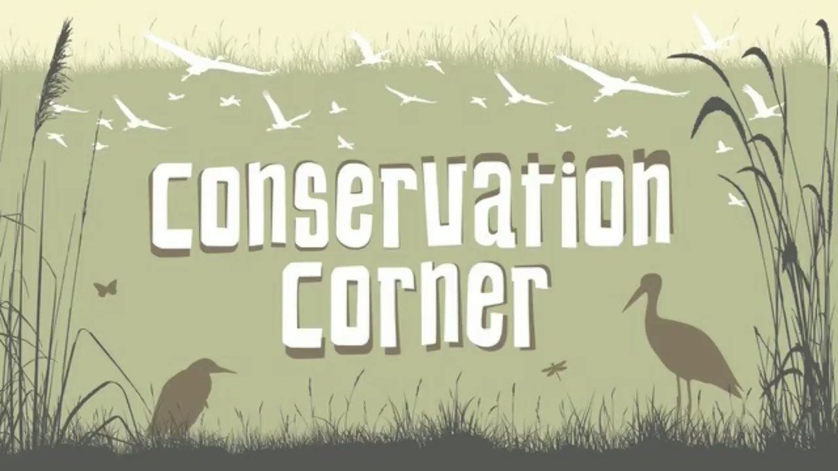 "Image for the Tweet beginning: Today's ""Conservation Corner"" episode brings"