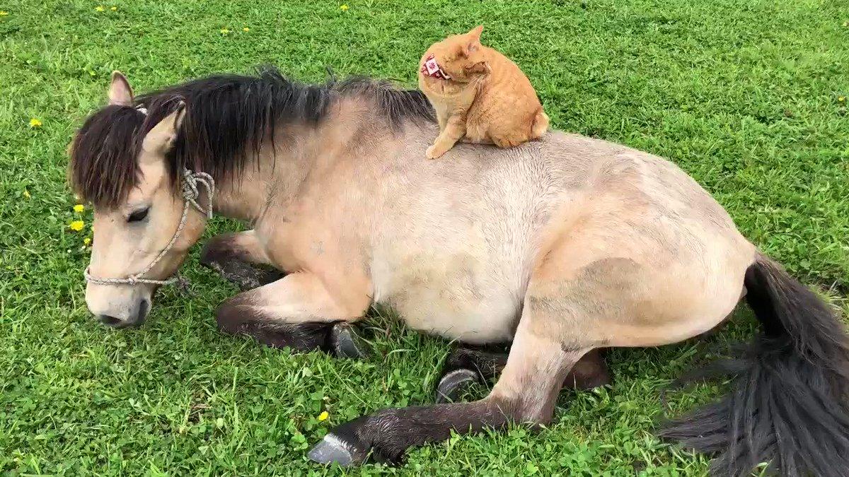 お腹いっぱい食べてウトウトする仙姫💤ロバ子と一緒に草のない放牧地でダイエット生活をしていましたが成功したので半日青草を解禁しています☺️ロバ子は引き続きダイエット中の為この間は馬房で少量の青草を食んでいます💨💨姿が見えると可哀想なので😅
