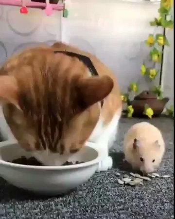 仲良くお食事タイム