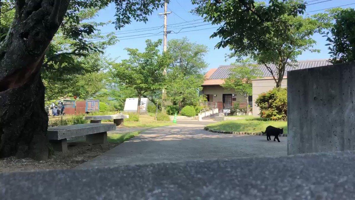 『おはニャ!😸Good morning! 』(2020/ 5/29) 🎨映像終わりに朝の挨拶があります。#尾道 #千光寺公園 #尾道市立美術館 #黒猫 #cat