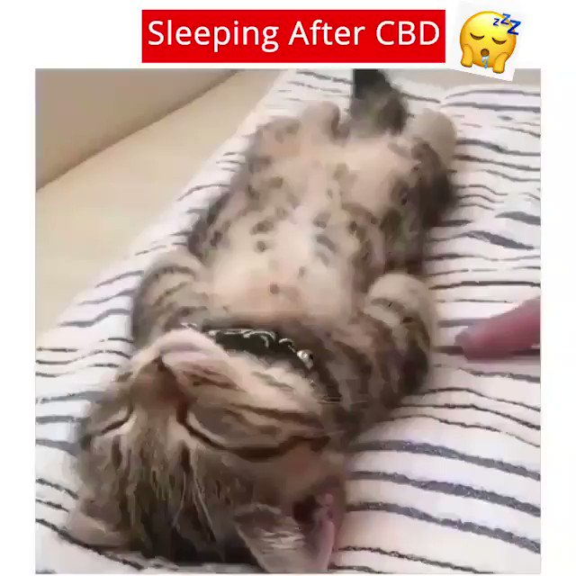 CBD Intake = Good night's #sleep  Who needs that? tag'em  Looking for the best #CBD products? Ready to try but not sure how? Well, we've got a special gift for you now –  All Natural CBD - NO THC! http://VharCBD.com/cbd-podspic.twitter.com/695t6uZw5C