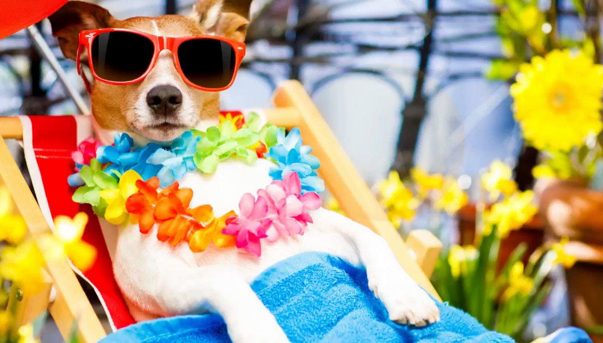 Image for the Tweet beginning: #SchoolsoutForSUMMER! Enjoy the sun everyone!