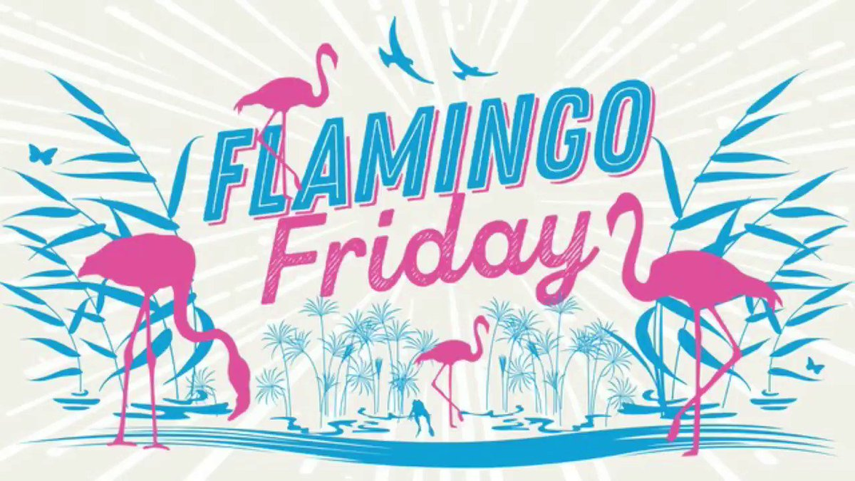 Image for the Tweet beginning: It's Flamingo Friday! Can you spot
