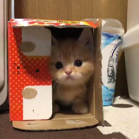 箱の中には・・・