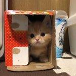箱の中にいるのは?お目々クリクリでキュートすぎる子猫!w