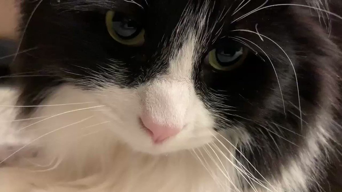 I am sad today. My human is sad. The world is sad   Share with me #SomeGoodNews or pictures of your pets, please    #Caturday #Saturday #Sad #CatsOfTwitter #dogsoftwitter #catsofinstagram #dogsofinstagram pic.twitter.com/djw9H55o7P