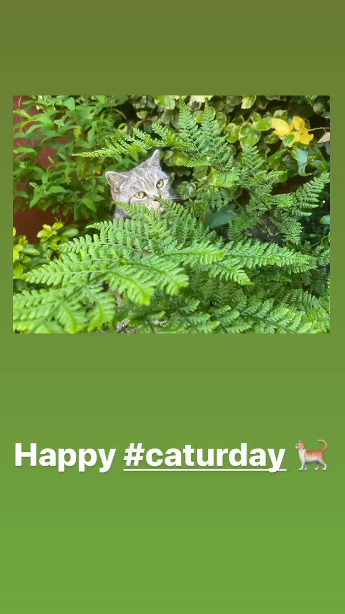 Happy #Caturday!! 🐈   #weekendvibes #weekend #sostraveluk #blogger #cat #CatsOfTwitter #cats #catpics #animallovers #travelblogger #mycat