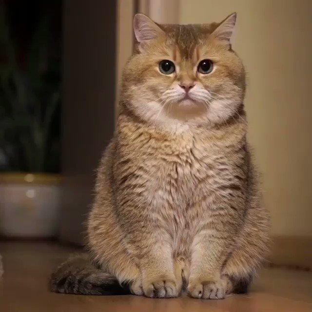 モッチモッチなネコを見て癒されてください